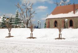 Junge Bäume Winter
