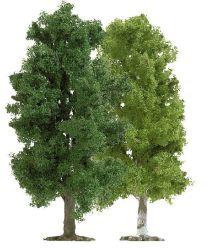2 Laubbäume TT (115)