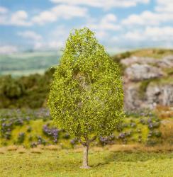 1 PREMIUM Elm tree