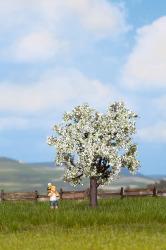 Kirschbaum blühend