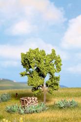 Birnbaum grün