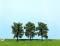 Heki 1716 4 Obstbäume 8 cm