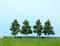 Heki 1732 5 Obstbäume 5-8 cm