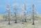 Heki 2105 5 Winterbäume 10 cm