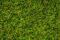 Noch 07077 Grasmischung Kuhweide 100g