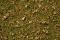 Noch 07079 Grasmischung Almwiese 100g