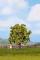 Noch 21560 Apfelbaum