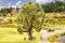 Noch 21765 HO Baum mit Baumhaus